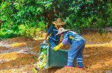 广州设农村生活垃圾分类工作目标:今年建100个示范村